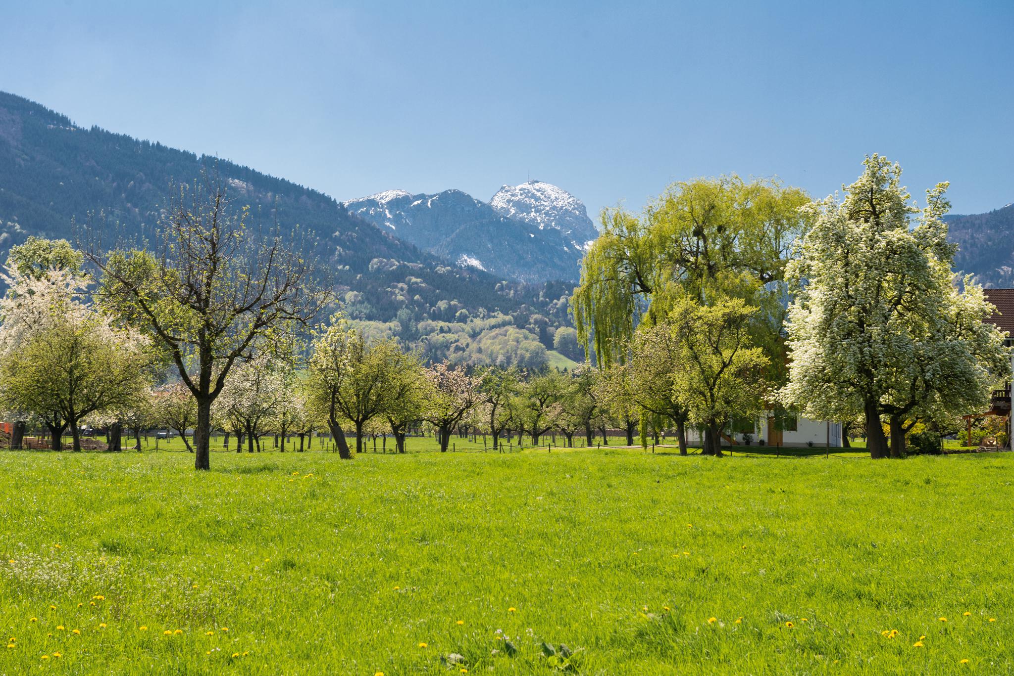 Blick auf den Wendelstein im Frühling © Chiemsee-Alpenland Tourismus
