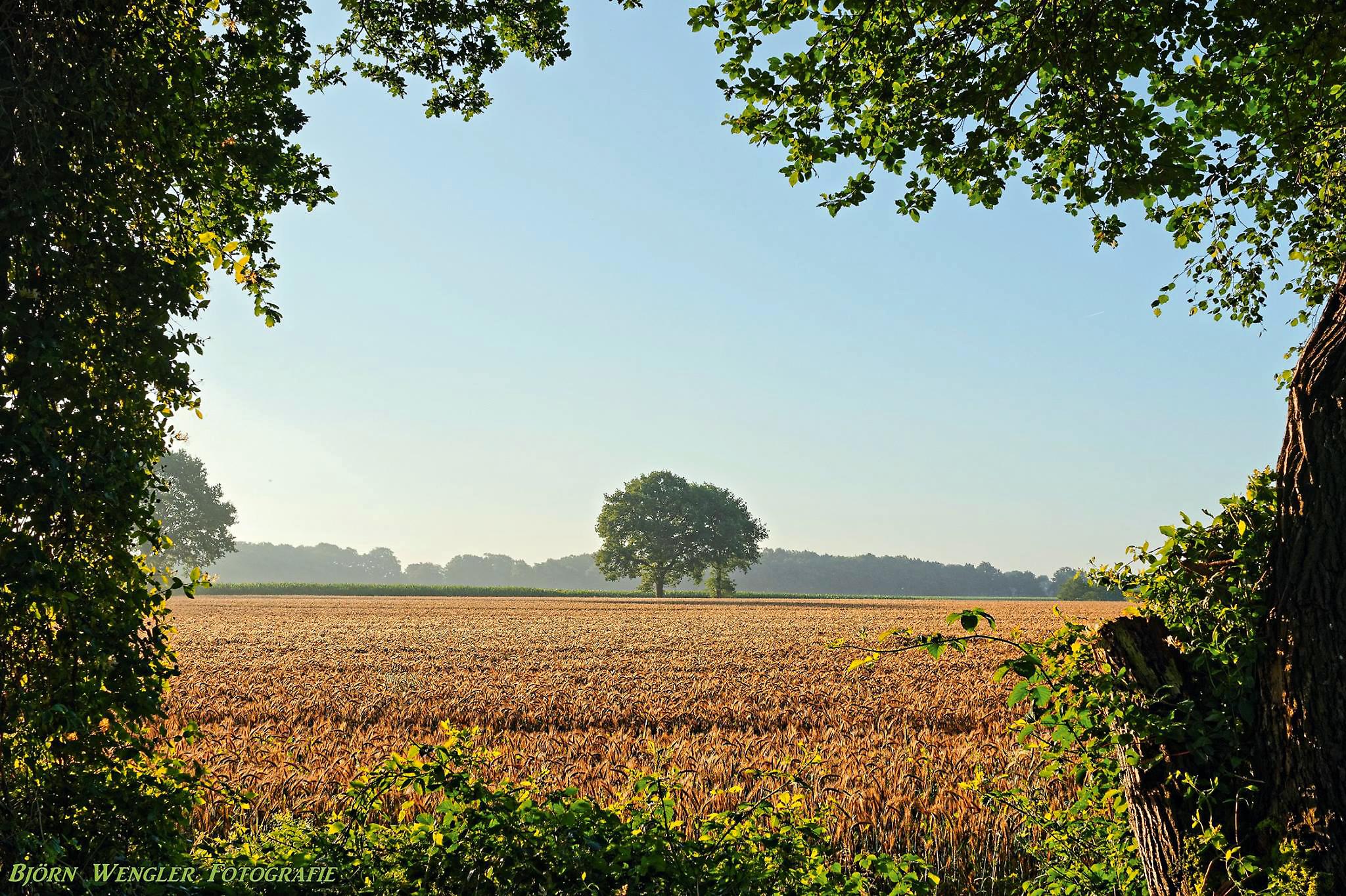 Felder, Wiesen, Bäume und kleine Wäldchen prägen das Land, wie hier bei Fintel am NORDPFAD Haxloher Erde © Björn Wengler Fotografie