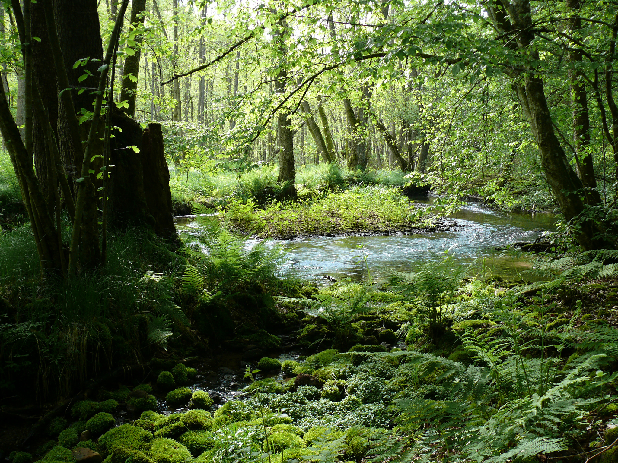 Frühlingserwachen im Erlenbruchwald © © Naturpark Spessart, Michael Kunkel