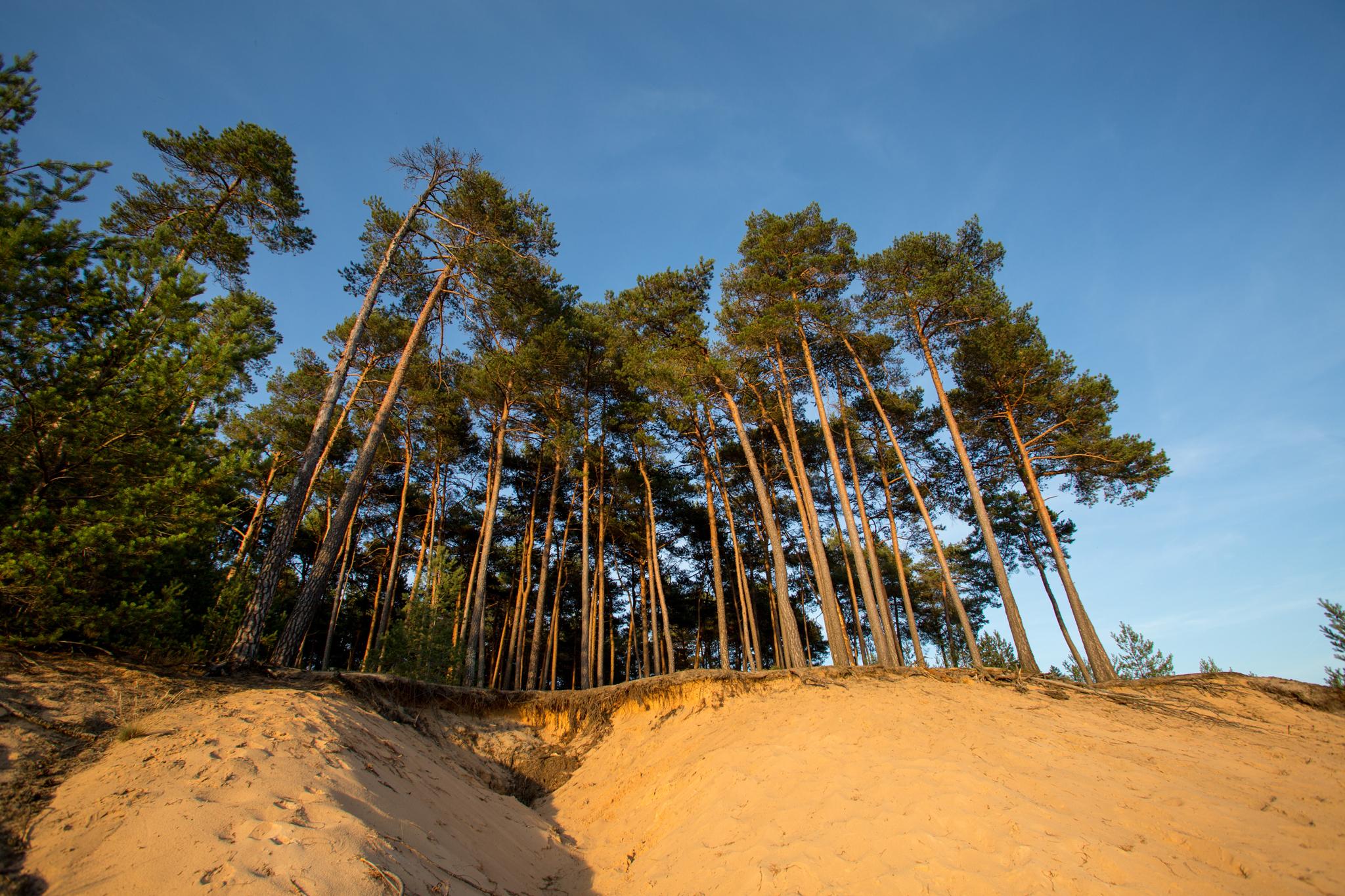 Dünenlandschaft © Thomas Geiger