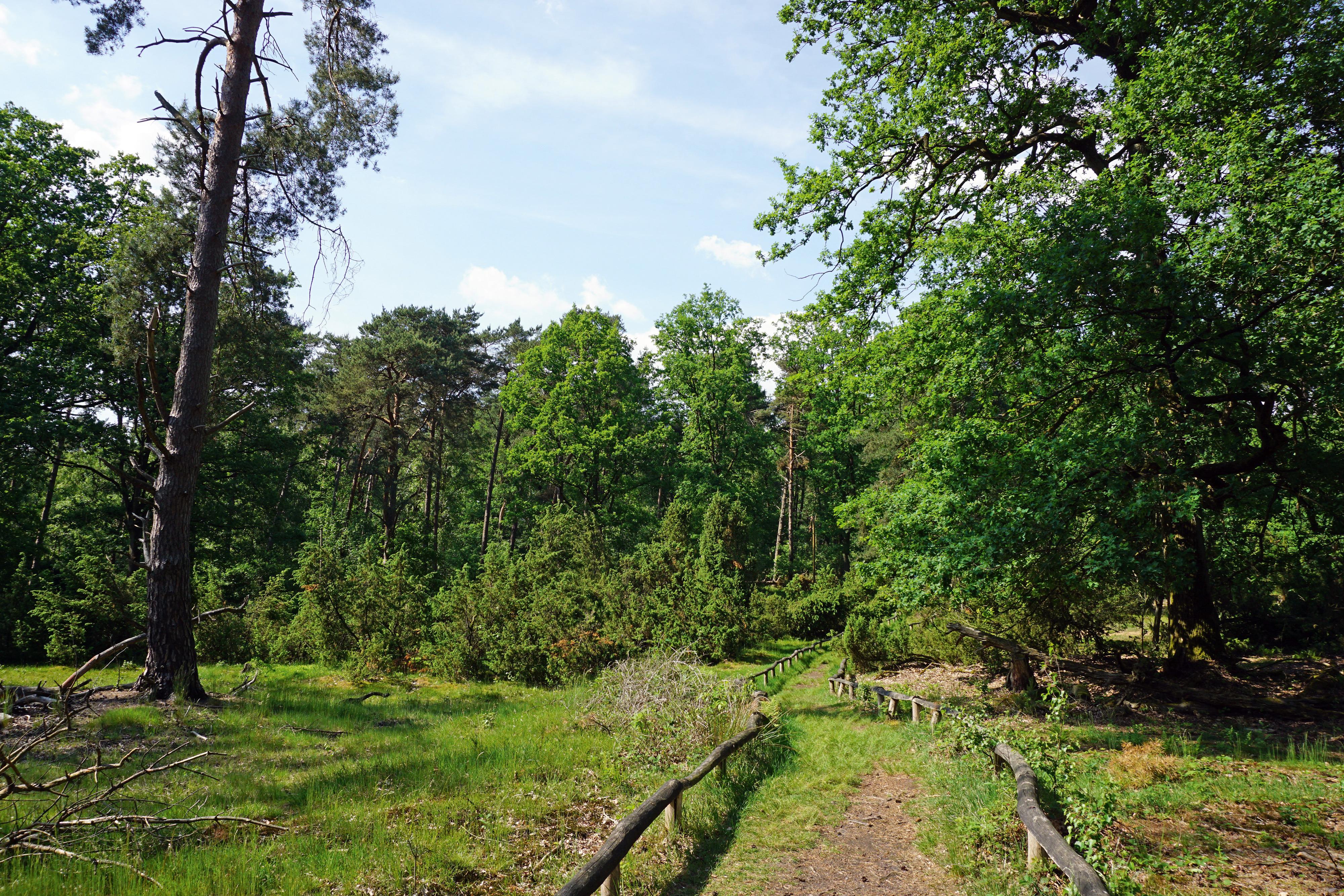 Im Naturschutzgebiet Bockholter Berge © Thorsten Hoyer