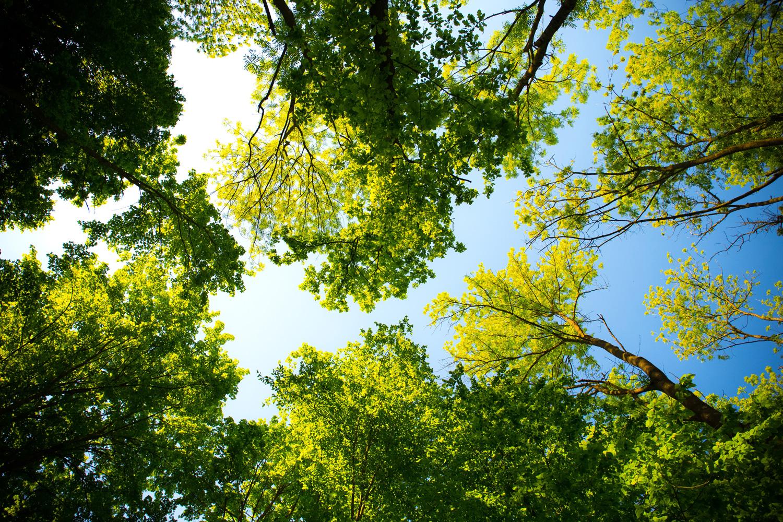 Das Blätterdach aus der Wurmperspektive © pixabay