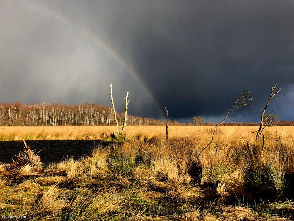 Unwirkliche Kulisse im Moor © Jarle Sänger