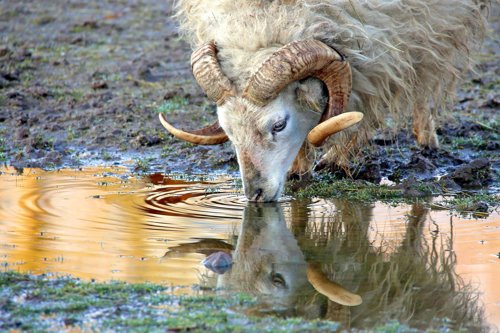 Erlebnis Natur auf der TourNatur © VDN/wimi