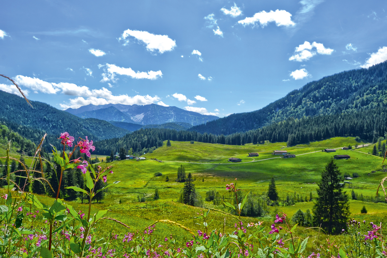 Die Albert-Link-Hütte umgeben von Blumenwiesen