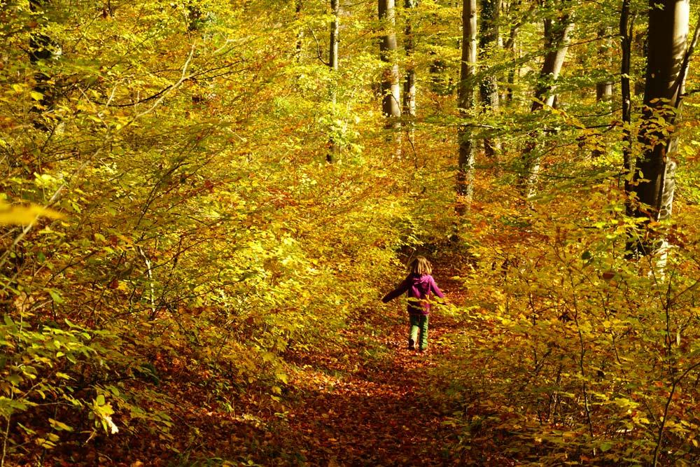 Unterwegs im herbstlichen Wald über der Sauerschleife © Thorsten Hoyer