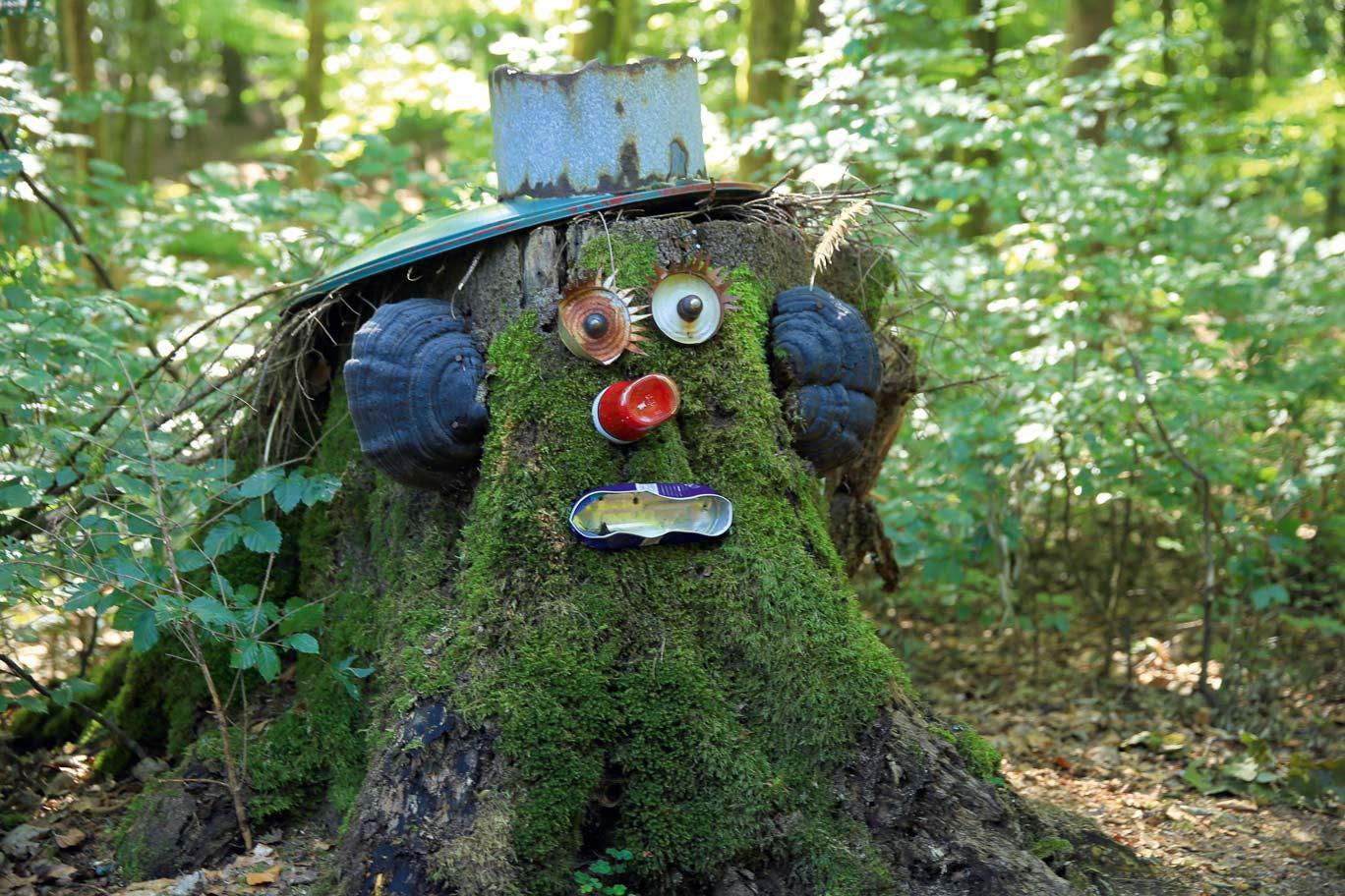 Viel zu entdecken: Lebensraum kreativer Waldwesen © Wandermagazin, M. Sänger