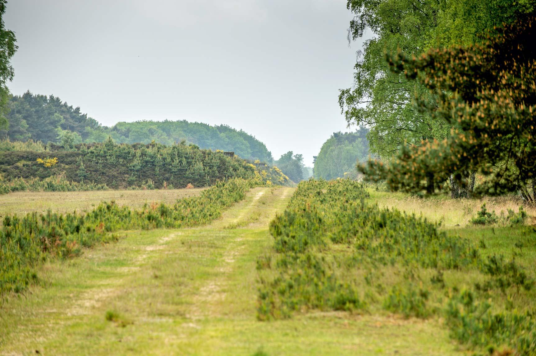 Das Naturschutzgebiet Brachter Wald nordöstlich von Brüggen besticht durch seine Artenvielfalt © Naturpark Maas-Schwalm-Nette, Marcel Hectors