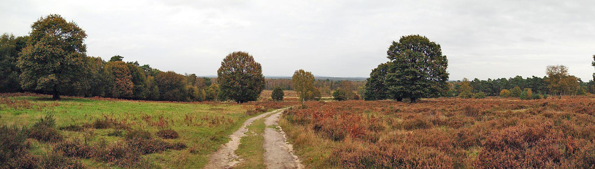 Die Wahner Heide bei Köln © pixabay