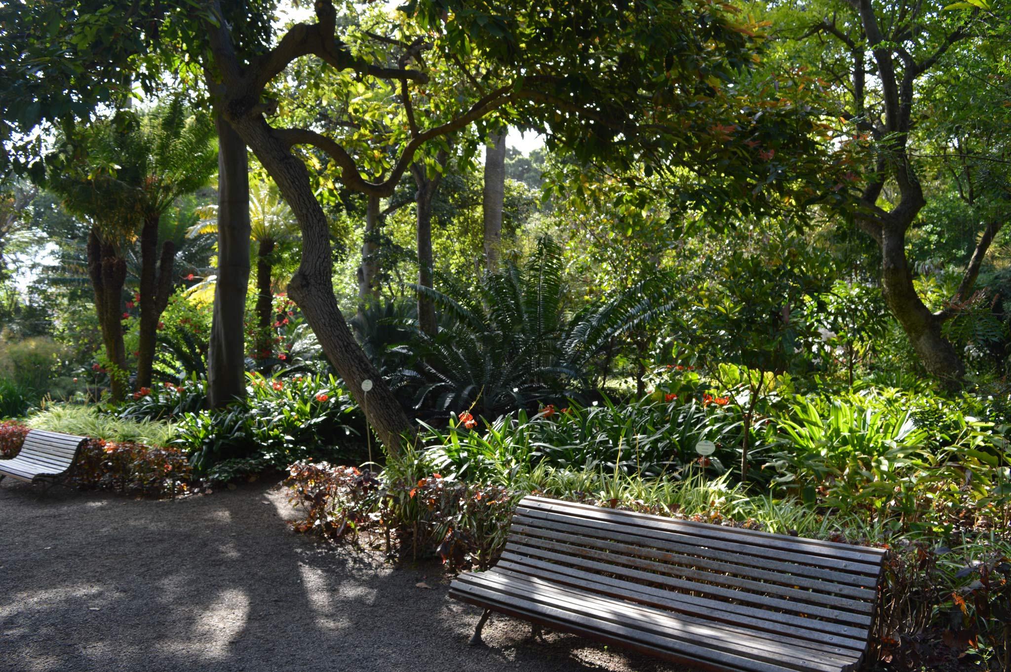 Der Botanische Garten in Puerto de la Cruz © S. Pries