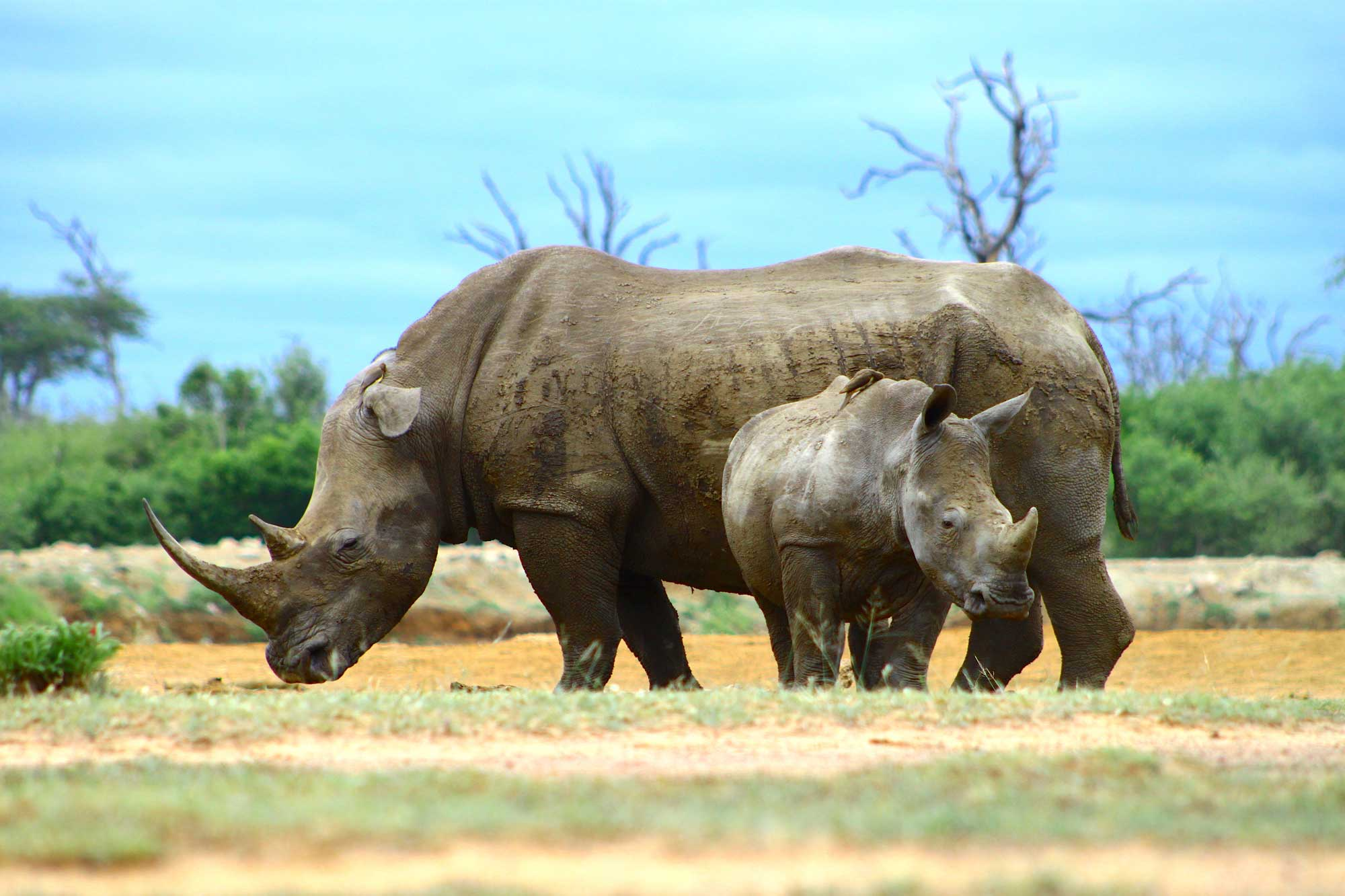Save the Rhino - Rettet das Nashorn © Garmont/GCC