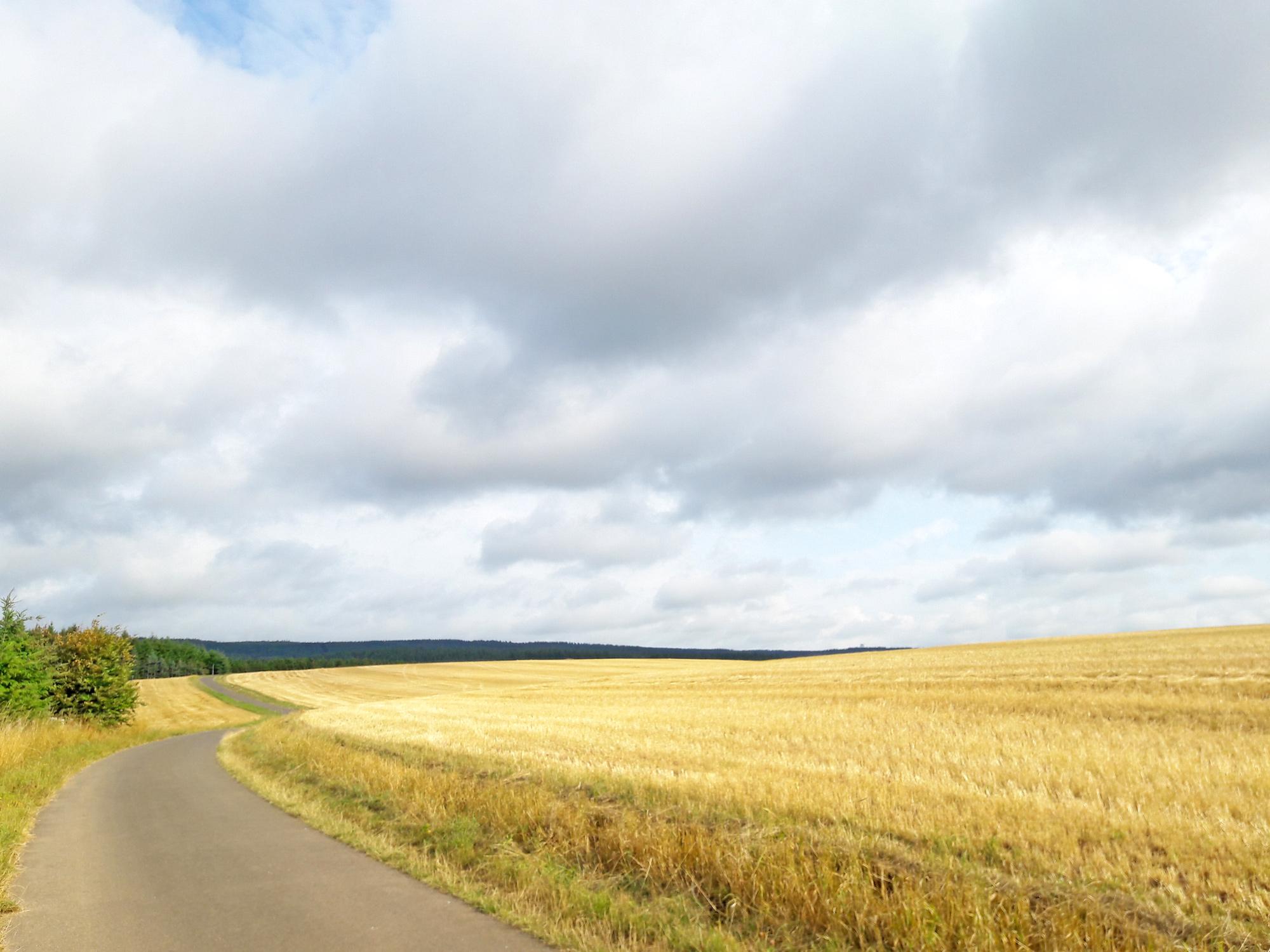 Weite Kornfelder in der Eifel © Svenja Walter