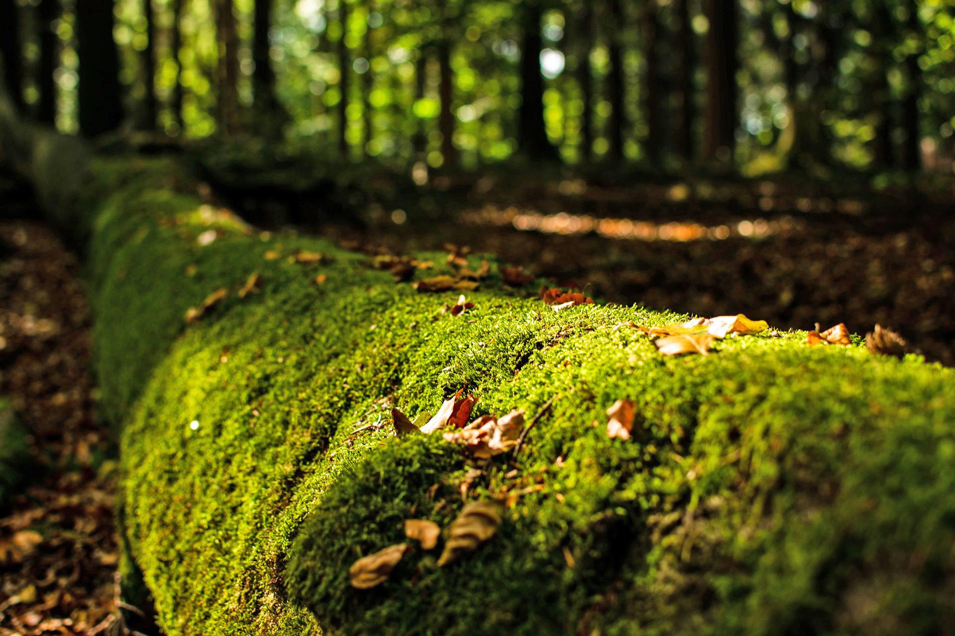 Totholz schafft neues Leben © pixabay