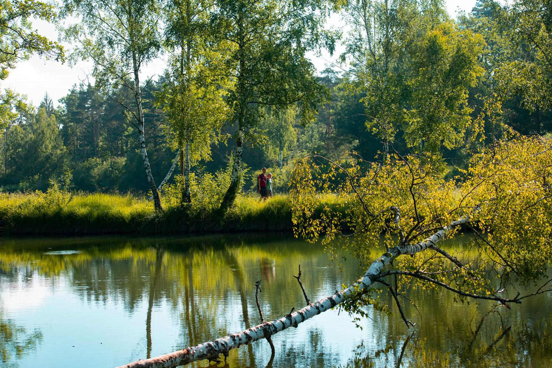 Auf dem DonAUwald-Wanderweg lassen sich Wald und Wasser einfach genießen © Jenny Kwittung