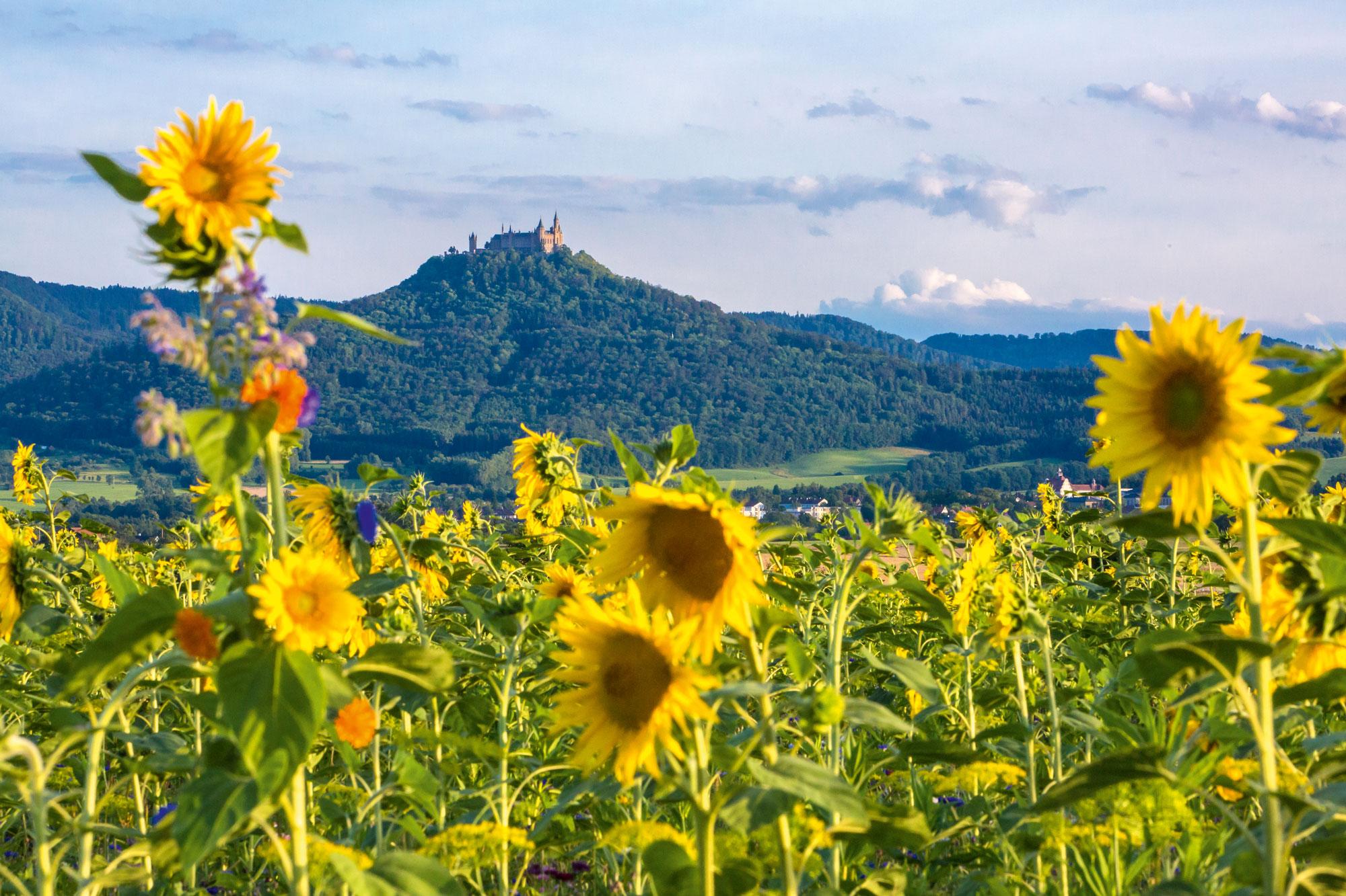 Blumige Aussichten auf Hechingen © Stadt Hechingen