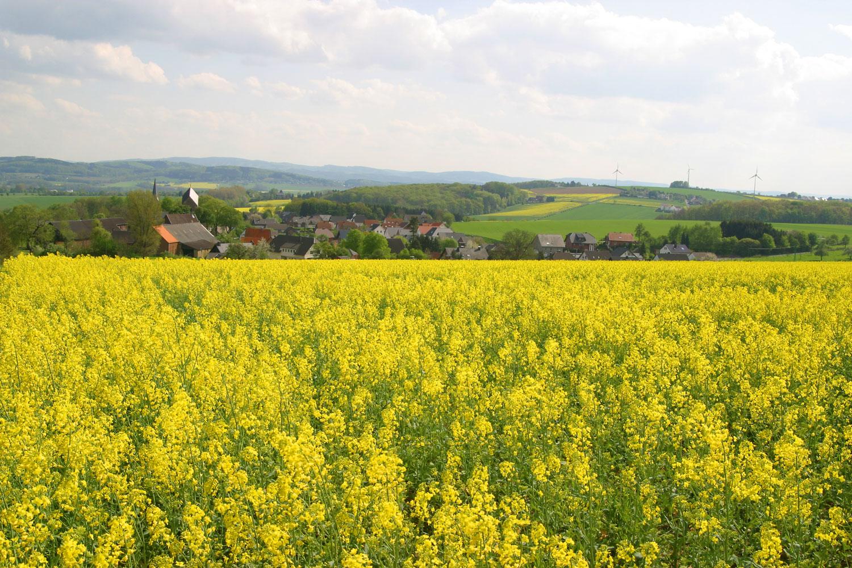 Blühende Rapsfelder vor Fröndenberg © Gerd Nolte