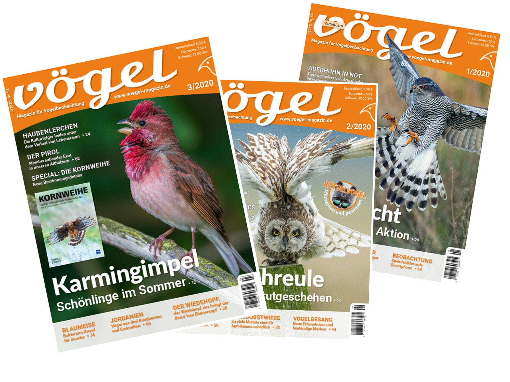 Das VÖGEL Magazin
