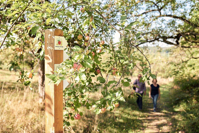 Wandern unter Apfelbäumen © C. Spitzbarth