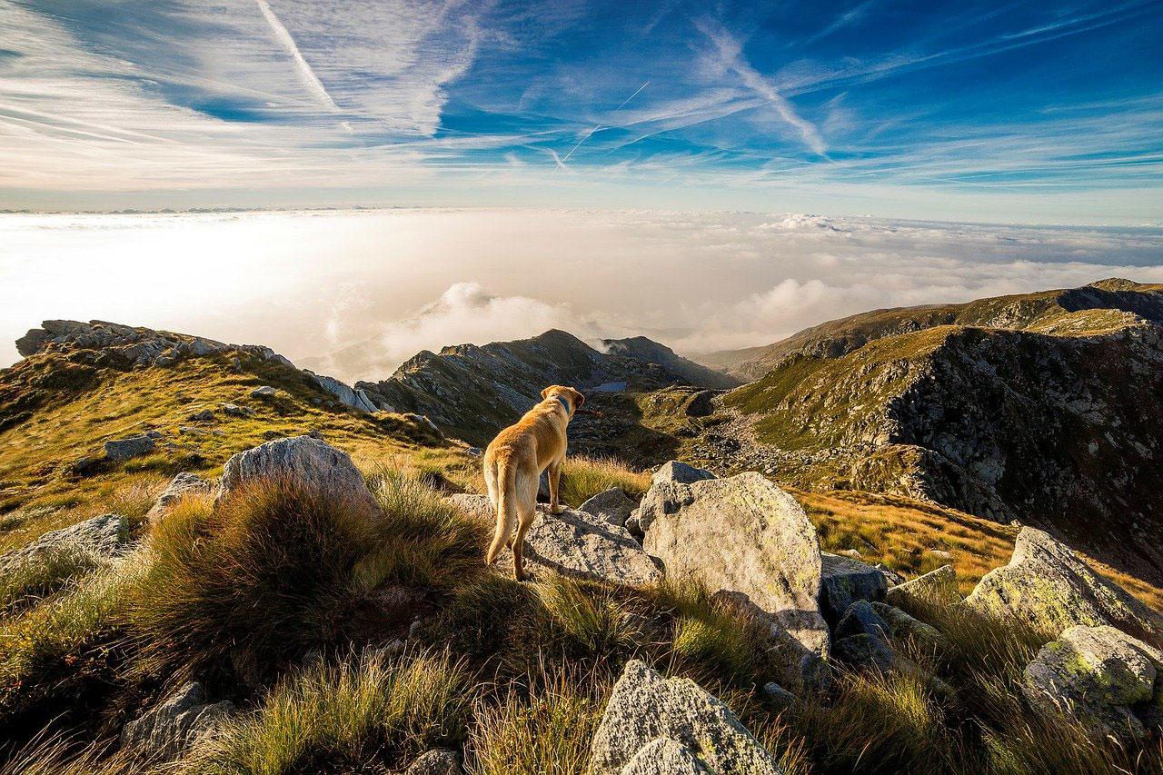 Wie schön, wenn der Hund sich frei und sicher bewegen kann.©pixabay.com,danfador(CC0 Creative Commons)