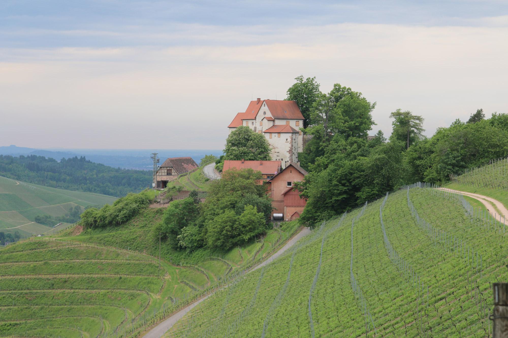 Auf dem Durbacher Weinpanorama © Manuel Andrack