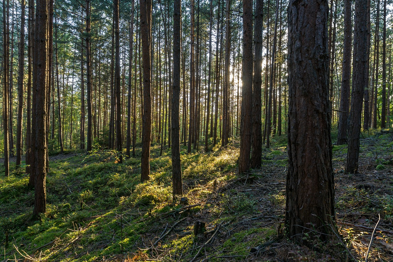 Wanderung im Thüringer Wald: Lebendige Stille - Natürlich