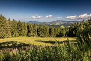 Schwarzwald Wandermarathon