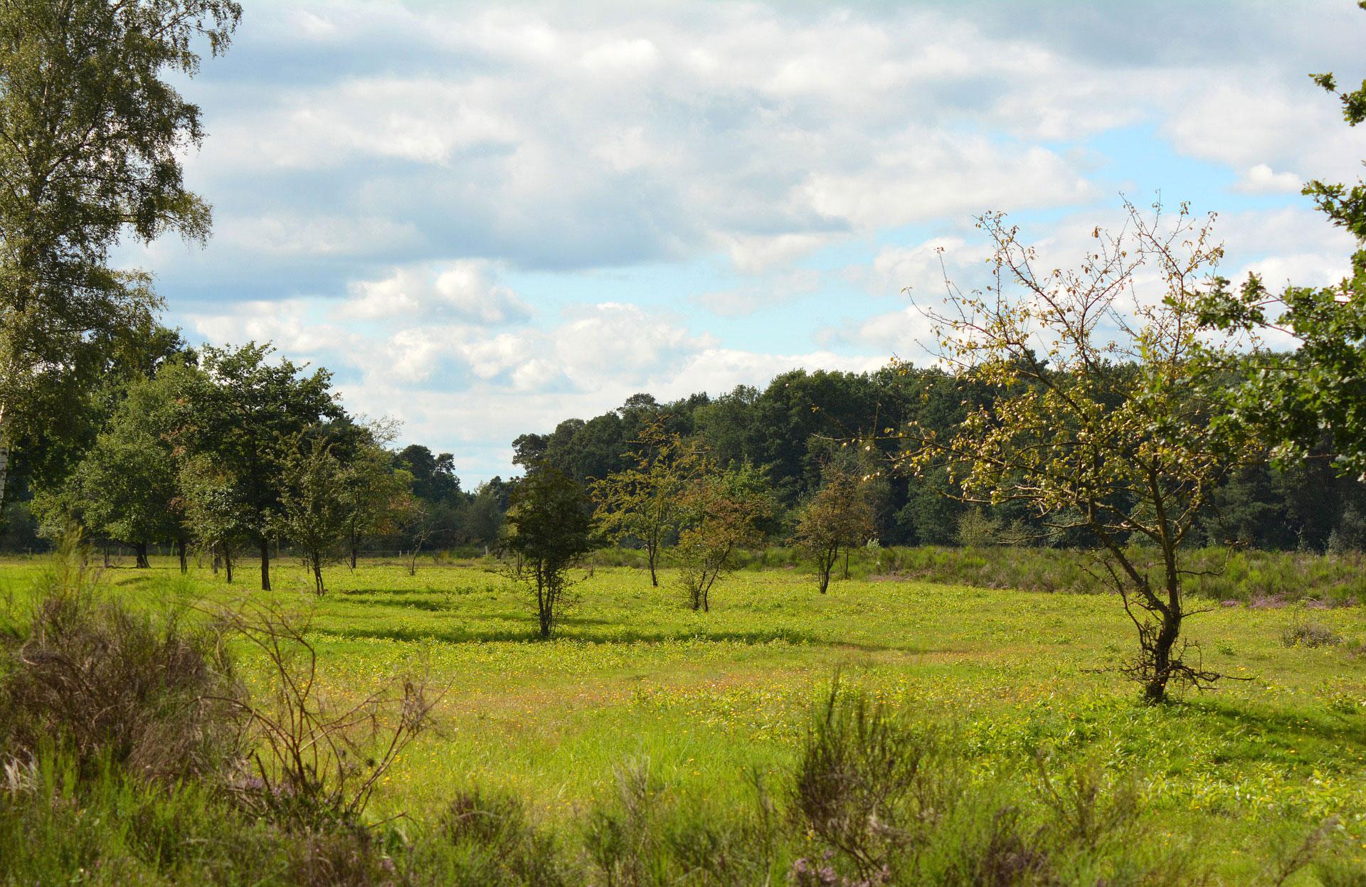 Der Heidespaziergang / Wahner Heide