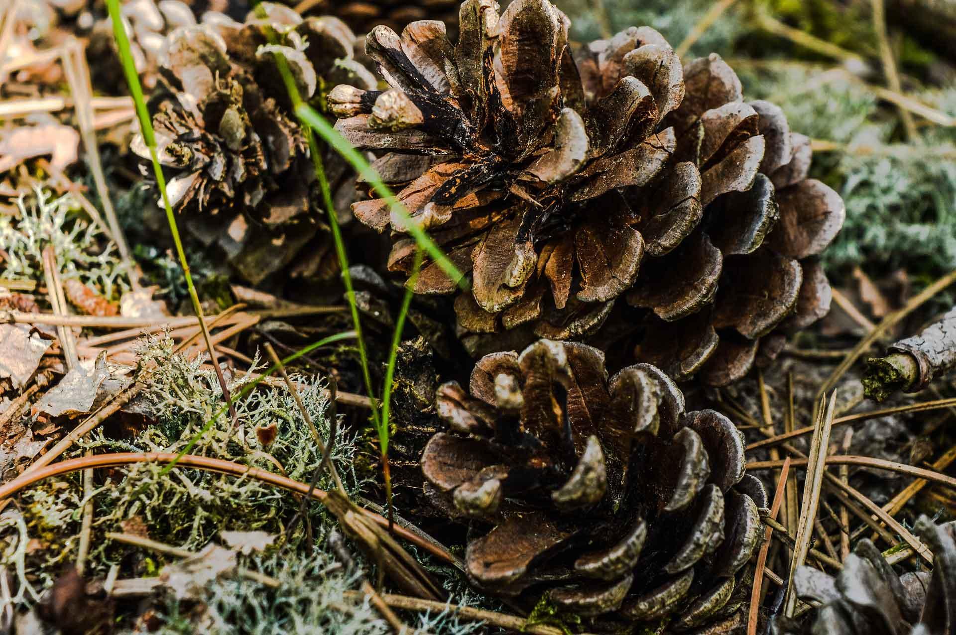 Wandern an dem Sagenhaften Waldpfad / Lambsborn