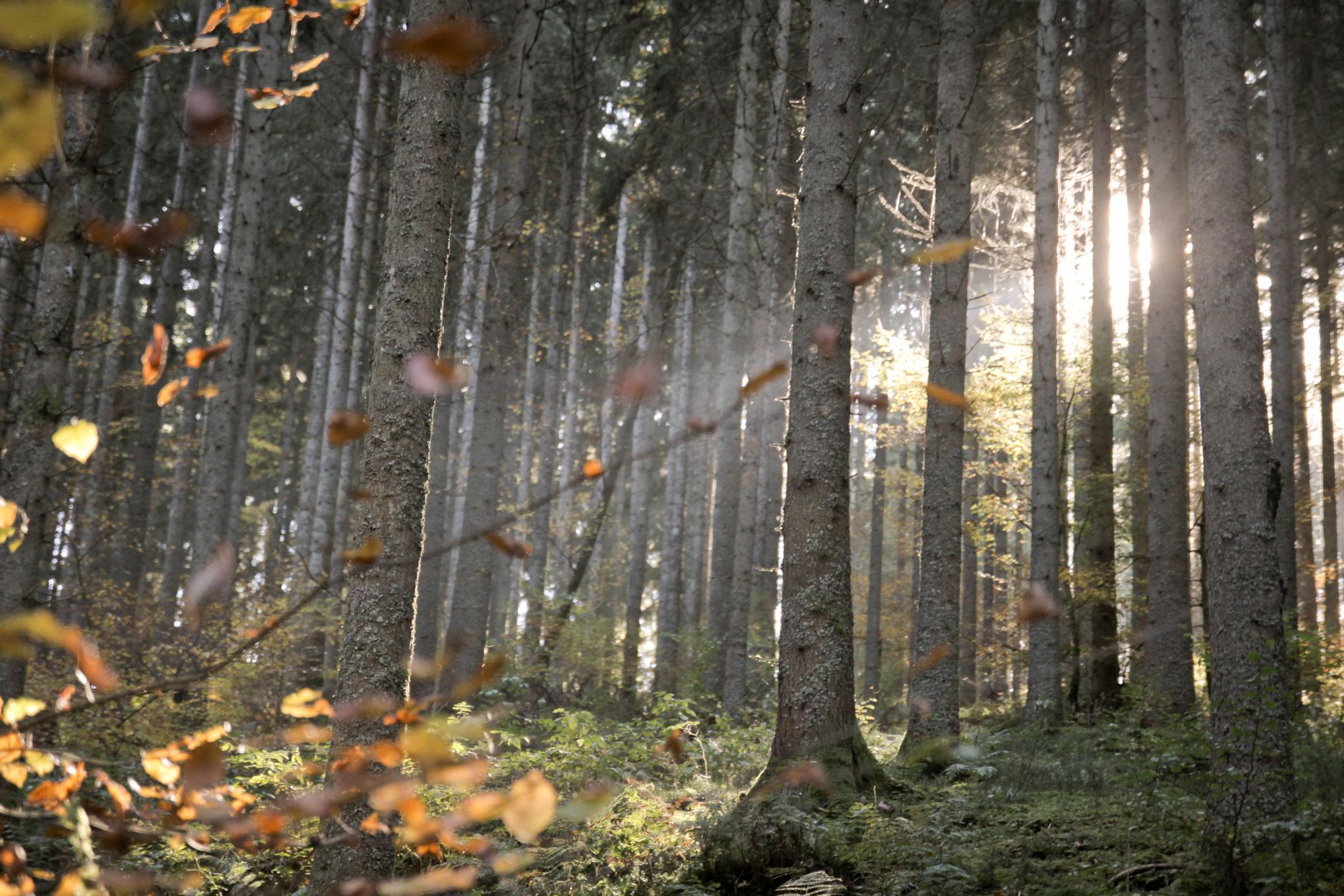 Urwälder der Zukunft Schwarzwald