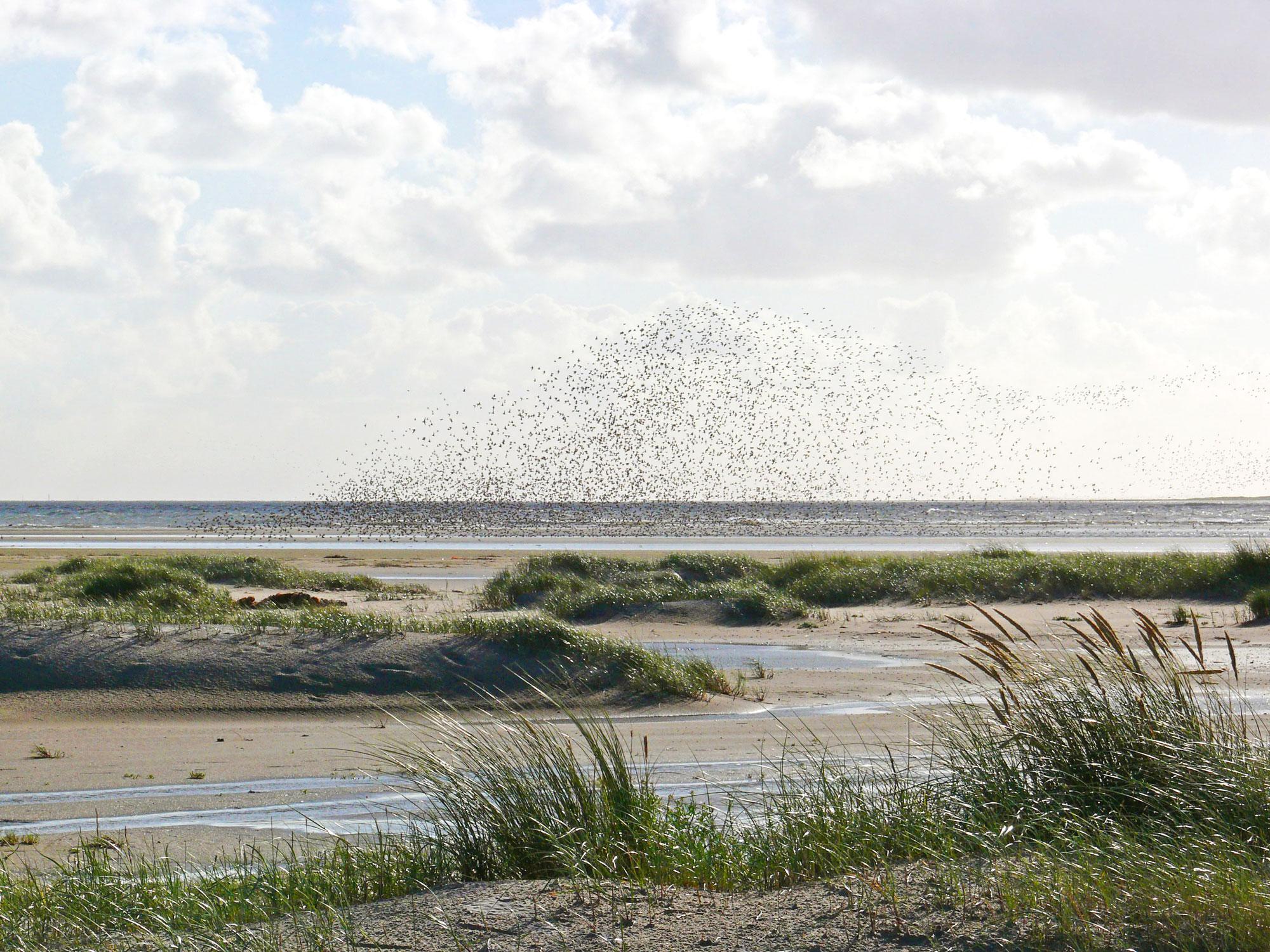 WWF Wattexpedition Langeoog