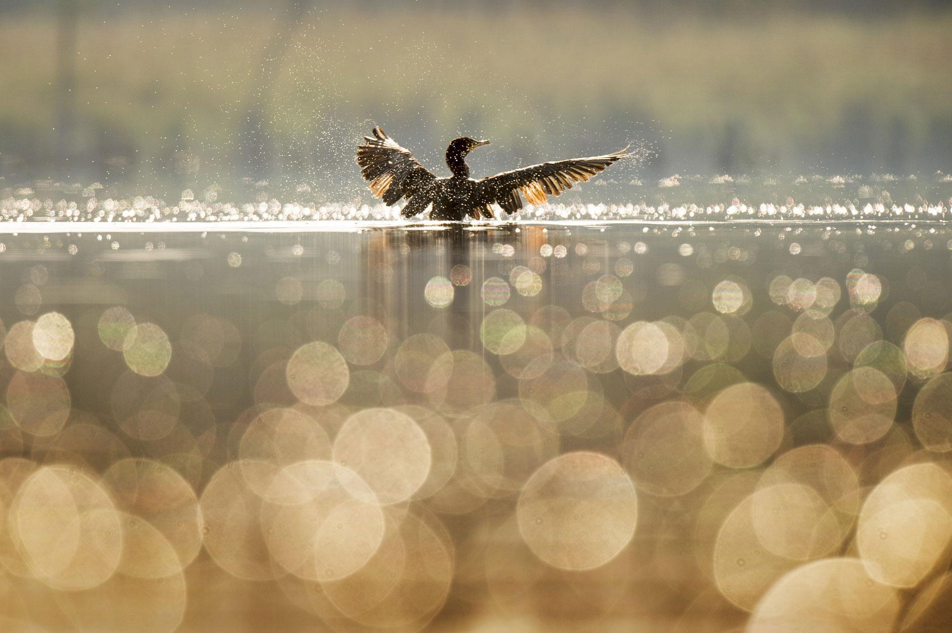 Wandern mit WDR 5: Vogelreservat im Norden Münsters