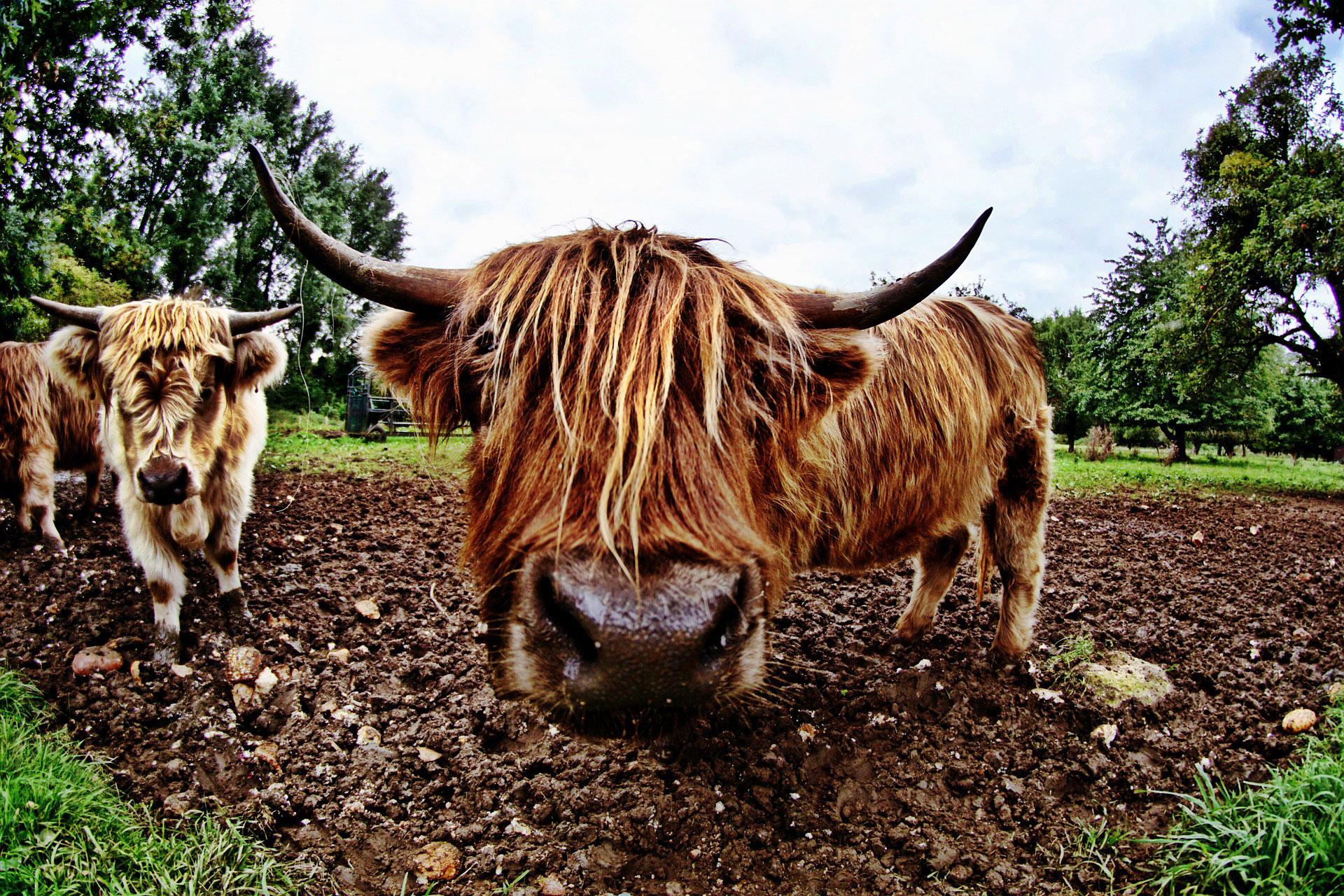 Wandern mit WDR 5: Ochsentour auf dem Stilleking