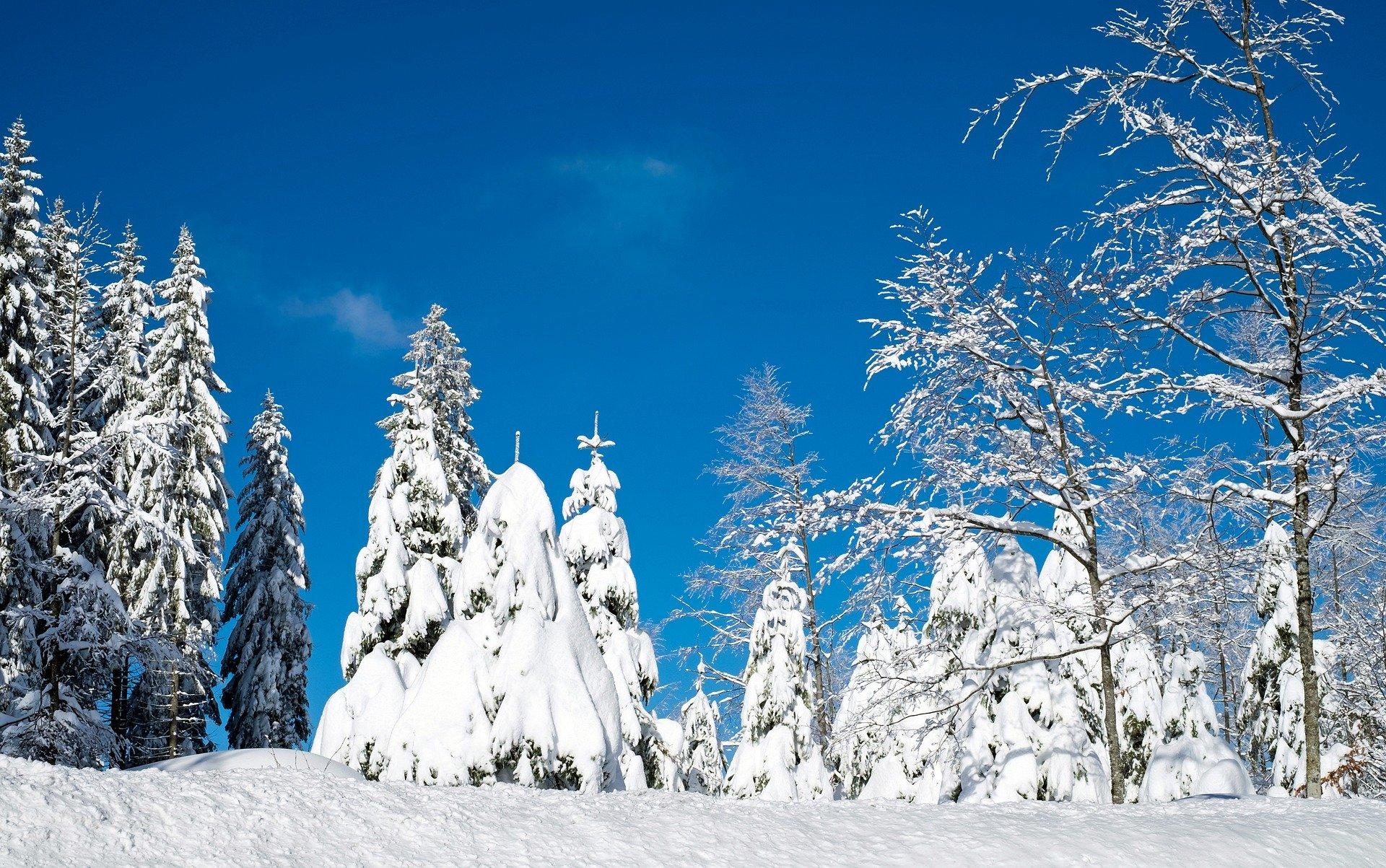 Hochschwarzwald Winter Halbmarathon