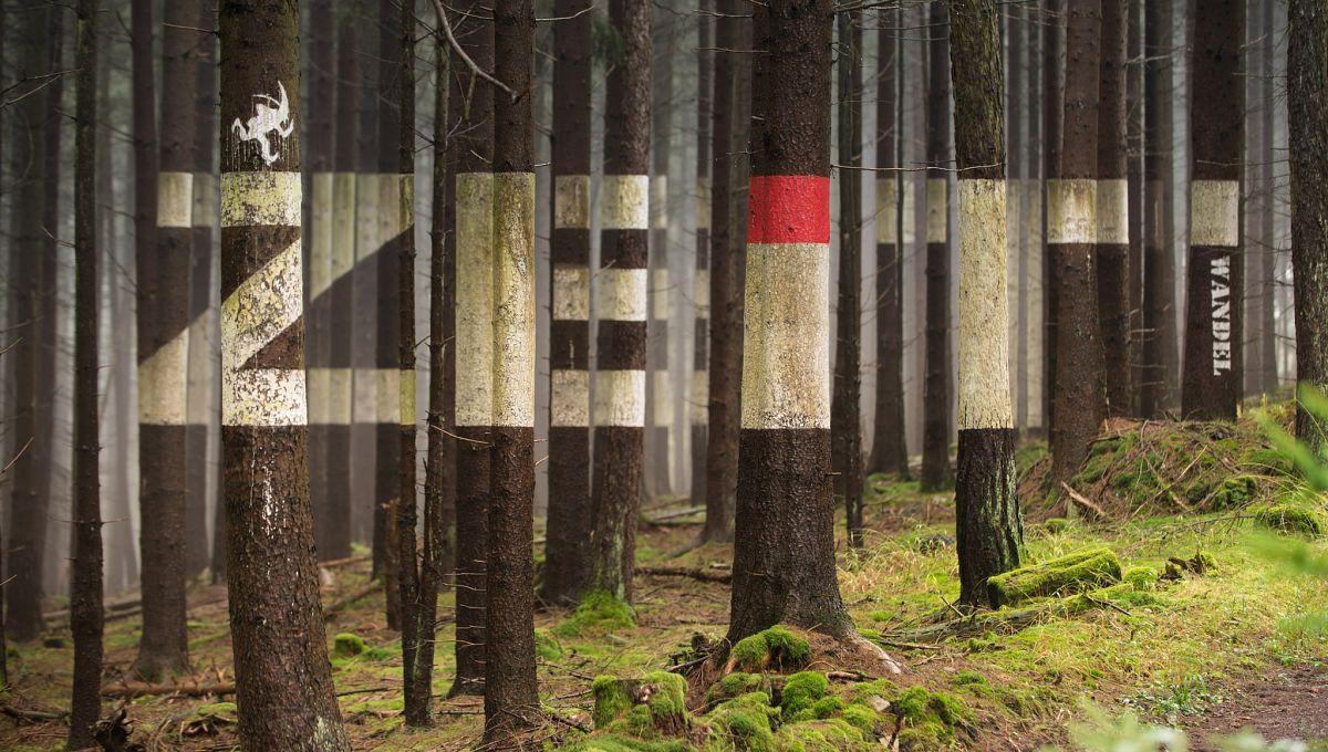 Waldkunst am Spessartbogen WALDverWORTUNG von Faxe Müller © Spessart Tourismus und Marketing GmbH