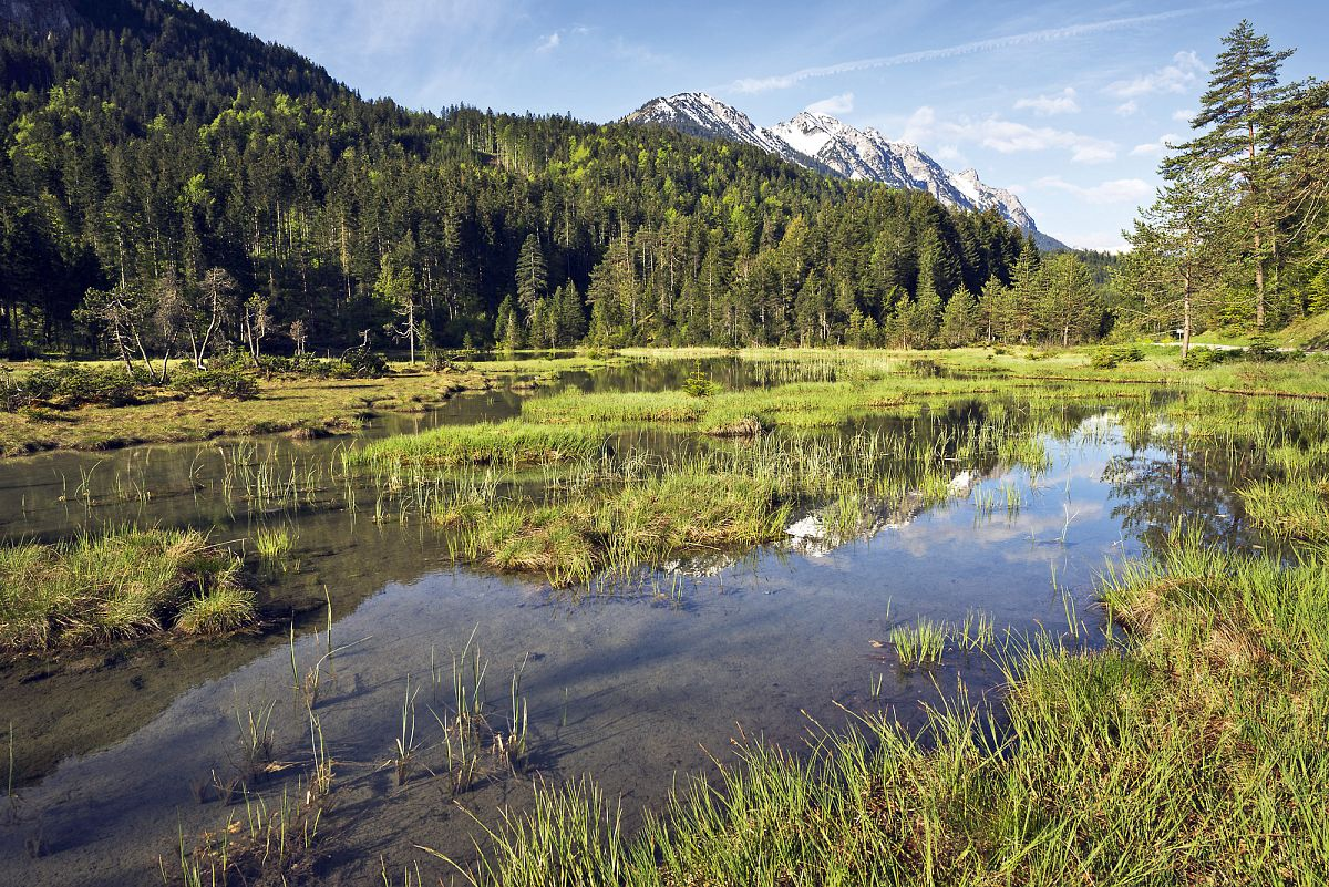 Auf dem Naturlehrpfad um das kleine Naturjuwel Riedener See gibt es für Naturliebhaber viel zu entdecken © Robert Eder