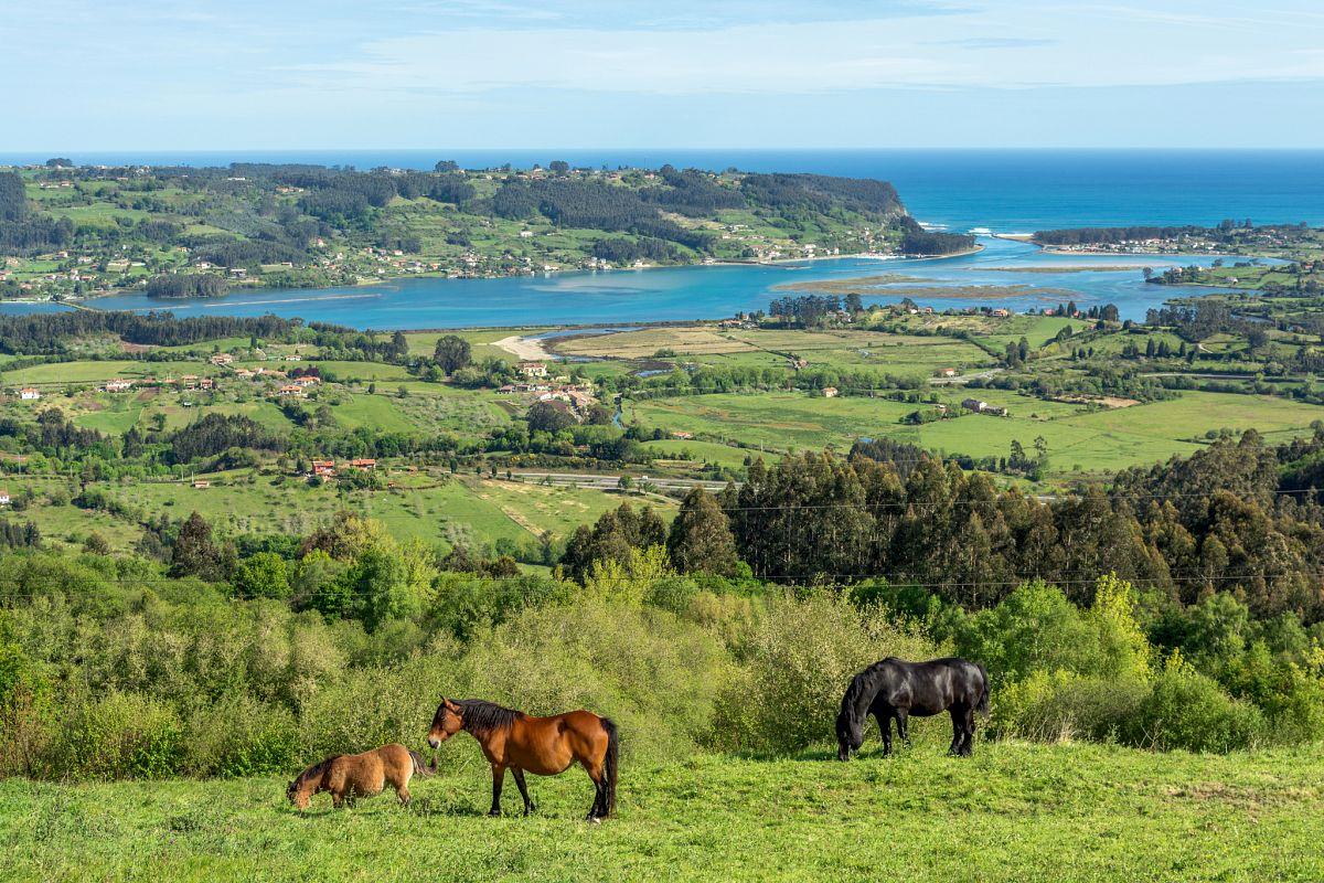 Grasende Pferde bei Villaviciosa © Spain is More