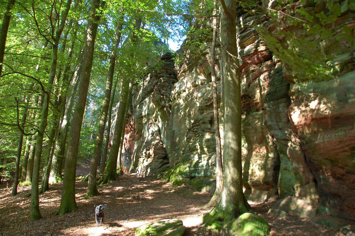 Schafstein auf der Hahnfels-Tour © Tourist-Information Dahner Felsenland