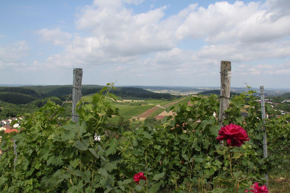 Weinberge und Wald im Naturpark Stromberg-Heuchelberg© Naturpark Stromberg-Heuchelberg