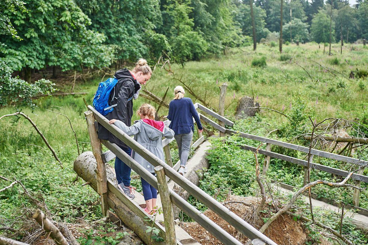 Auf dem Wilden Kermeter in der Eifel © Apart Fotodesign - Alexander Pallmer,Nordeifel Tourismus GmbH