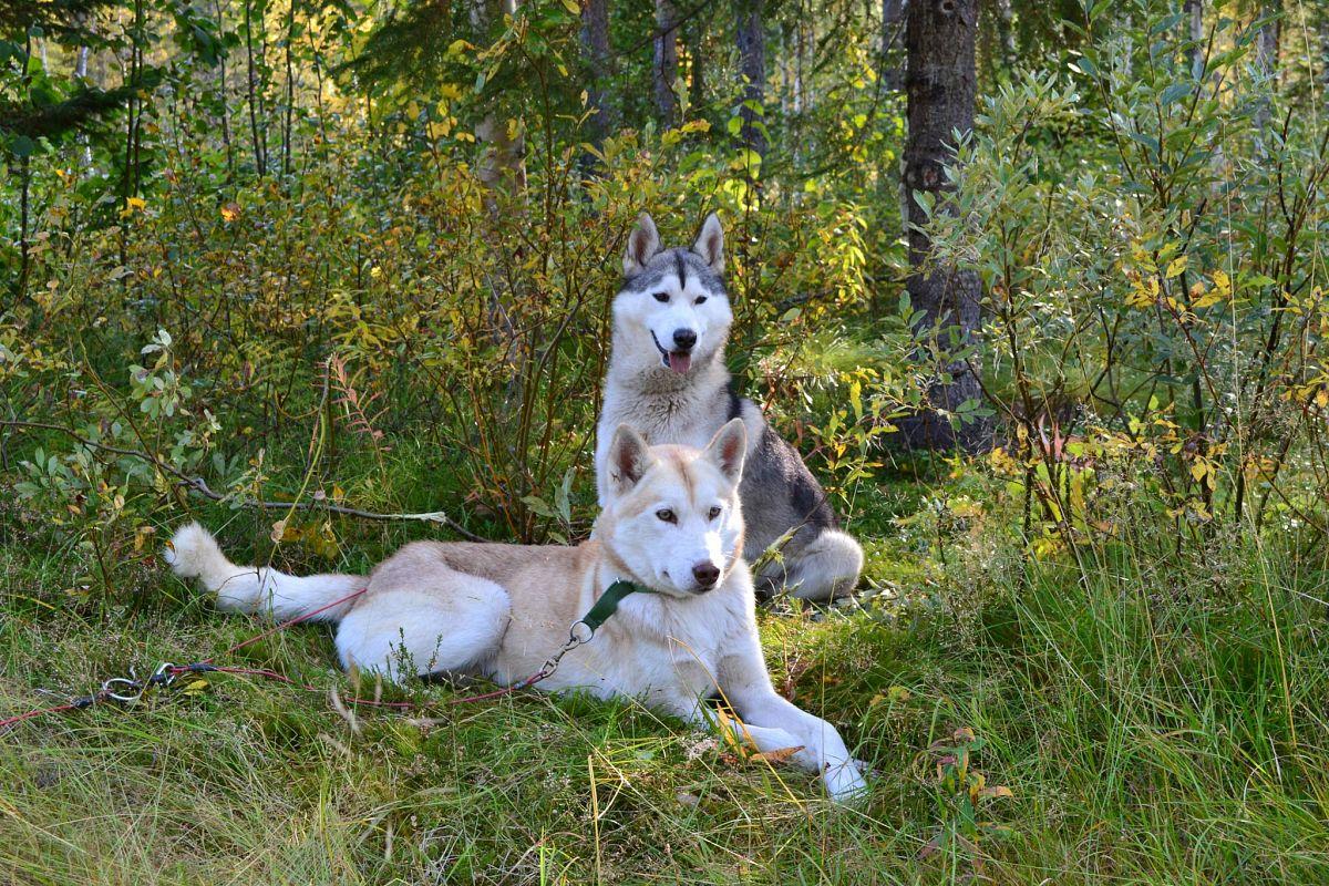 © Freizeit mit Huskies