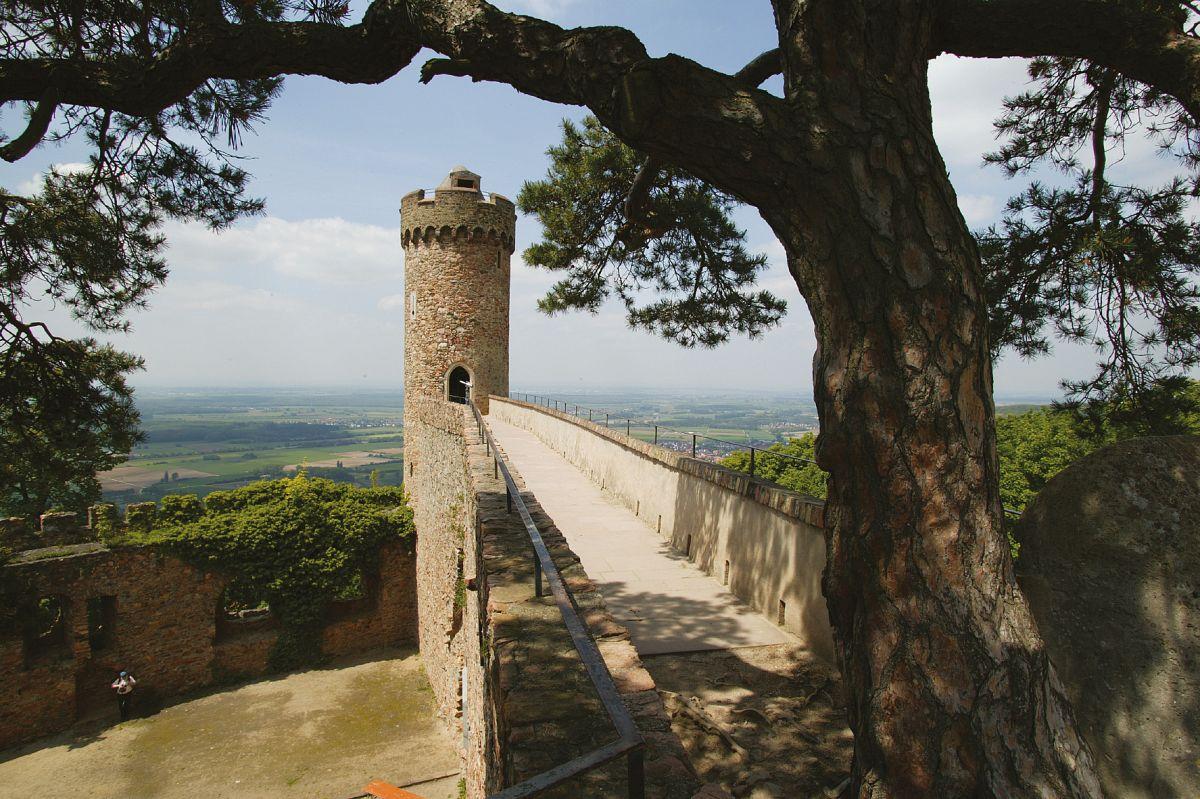 In luftiger Höhe: Über den Laufsteg im Himmel zur Aussicht auf dem Auerbacher Schloss © Tourismus Service Bergstrasse, Ludwig März