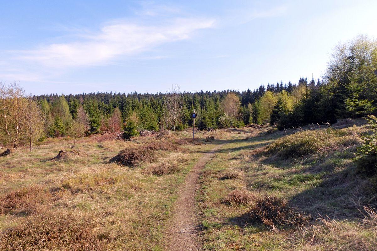 Eine Heidefläche zwischen Spechtsbrunn und Steinbach am Wald © Svenja Walter