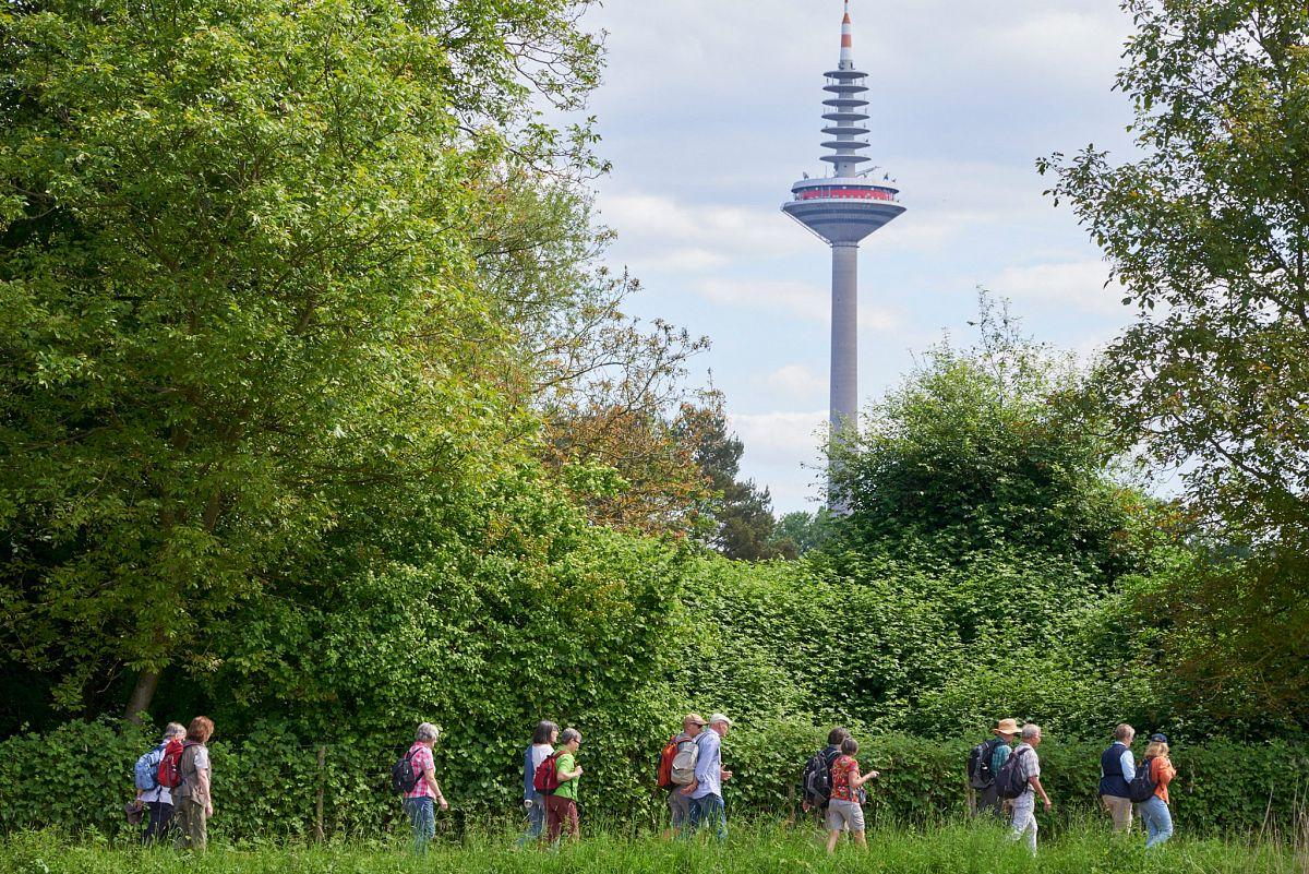 Wandern im grünen mit dem Fernsehturm im Blick © Umweltamt der Stadt Frankfurt/Stefan Cop