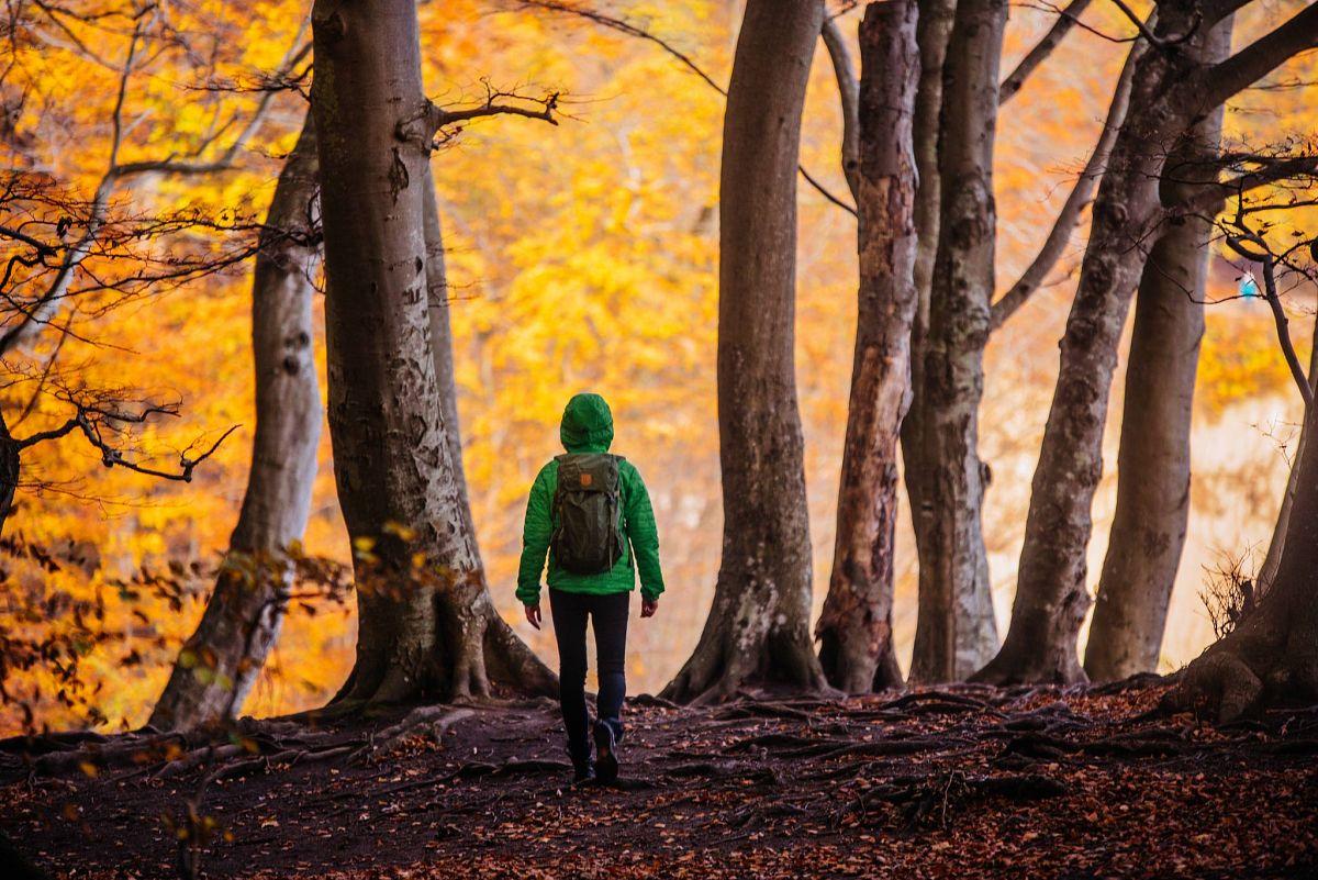Herbstlicher Wald auf Rügen© Tourismuszentrale Rügen/Christian Thiele