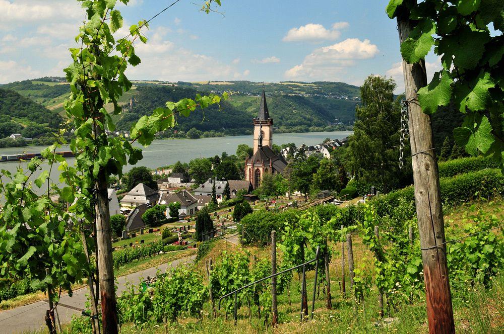 Blick durch den Welterbeweinberg auf Lorch am Rhein, In Vino Veritas
