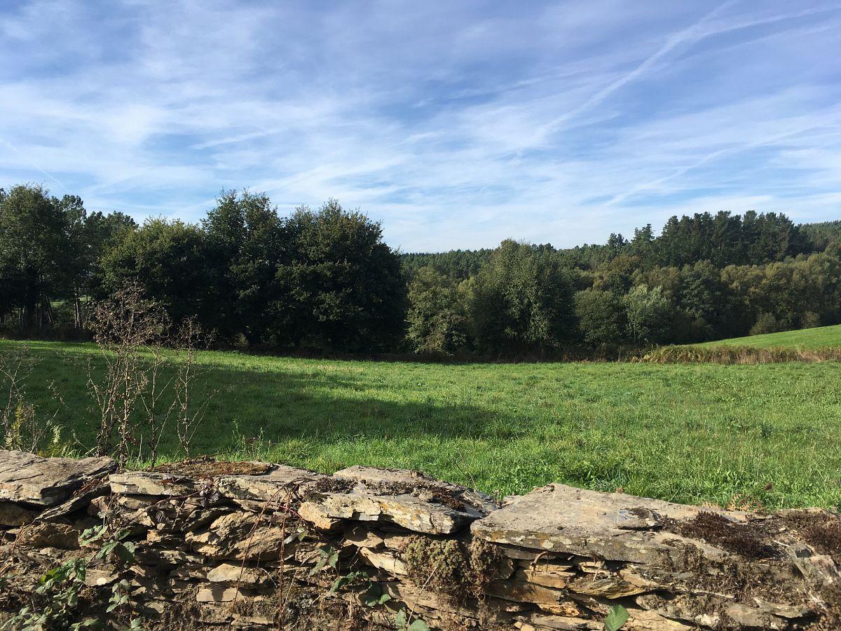 In der Nähe von Portomarín, Blick auf die grüne Natur Galiziens © Susanne Otto