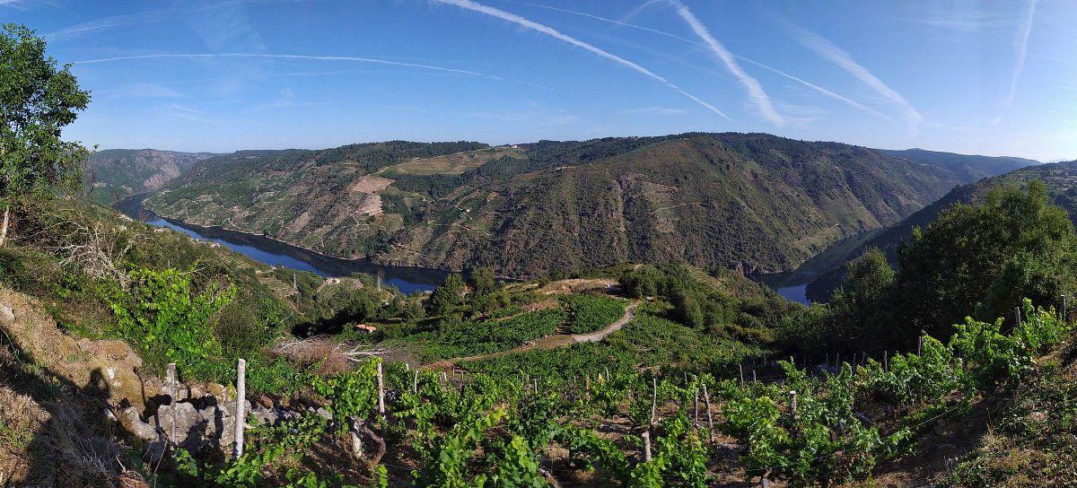 Ausblick in die Weinanbauregion Ribeira Sacra © Galicia Walking Festival
