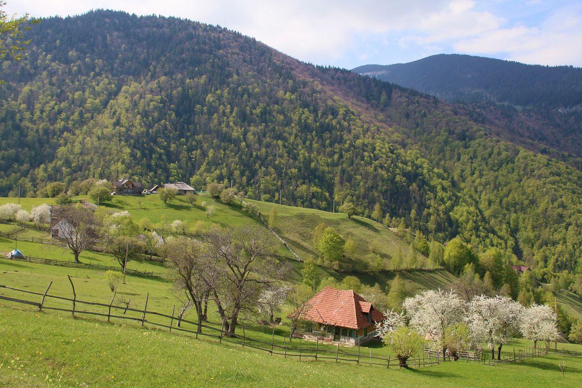 Der Frühling hält Einzug in den Piatra-Craiului-Nationalpark.