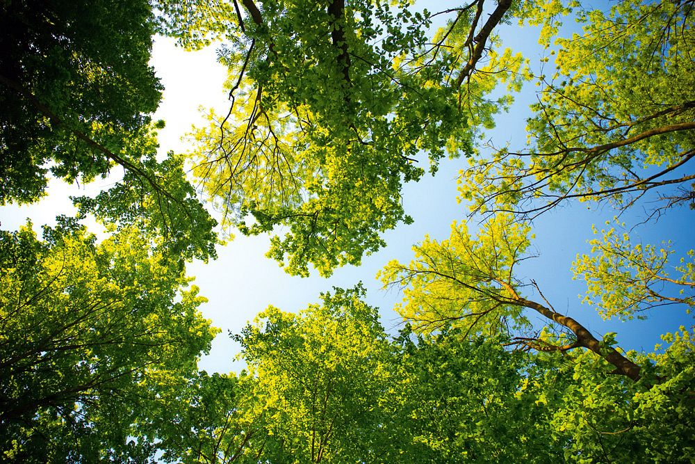 Das Blätterdach aus der Wurmperspektive © pexels, Valiphotos