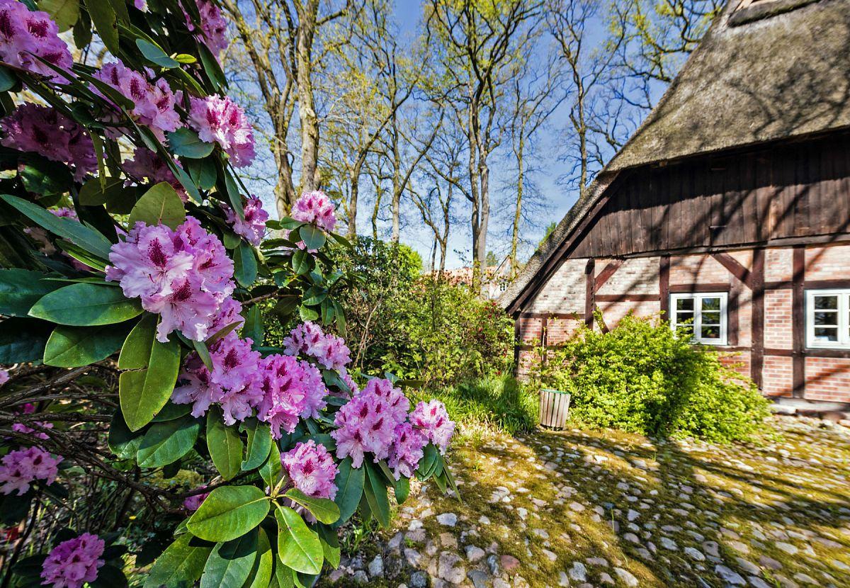 Es wird wärmer und sonniger. Die Rhododendrenblüten brechen auf. © Lüneburger Heide GmbH
